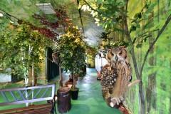 原宿乃フクロウの森とヒョウ猫の森!カフェの営業 …