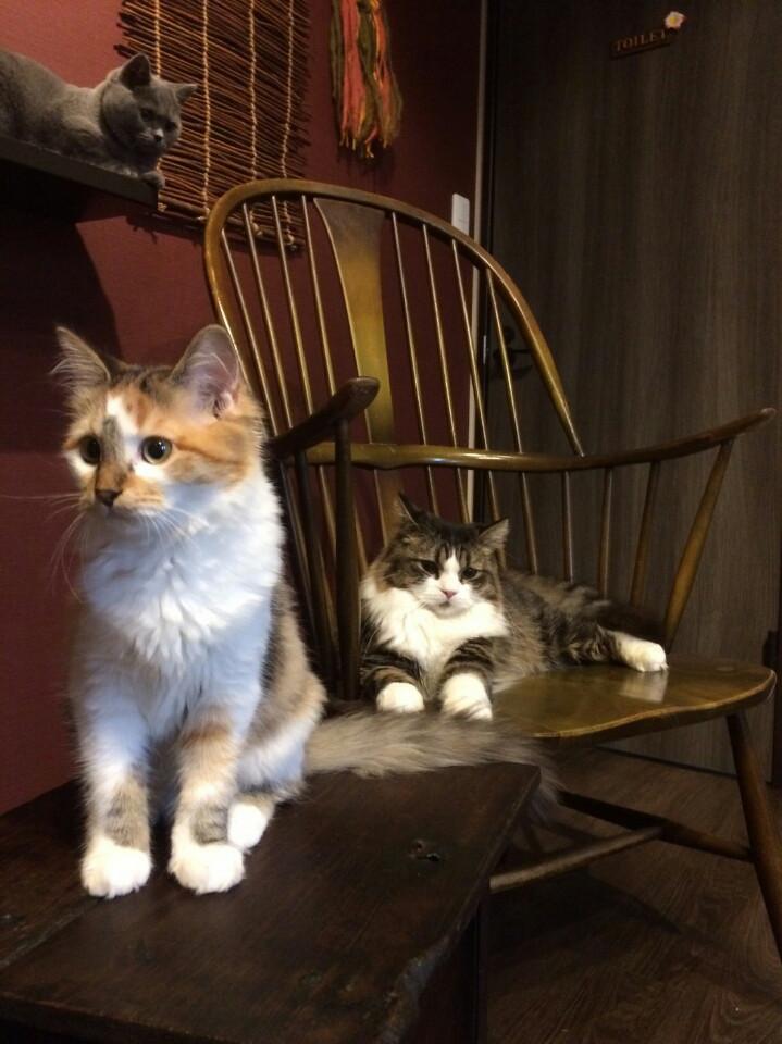 こんな癒やし空間が岡山に!知る人ぞ知るオシャレな猫カフェ ...
